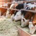 Tips To Save Money Until The Cows Come Home