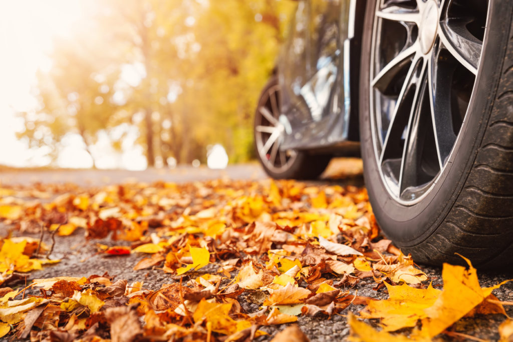 Car on asphalt road on autumn day at park
